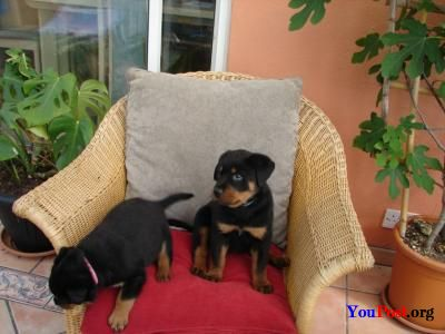 Dogs - Pets and Animals - YouPost org - Free Classified Ads